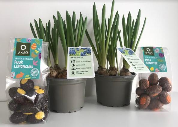 bloembollen-in-pot-laplace-chocolade-eitjes-pakketzenden-verrassing-voorjaar-thuiswerken