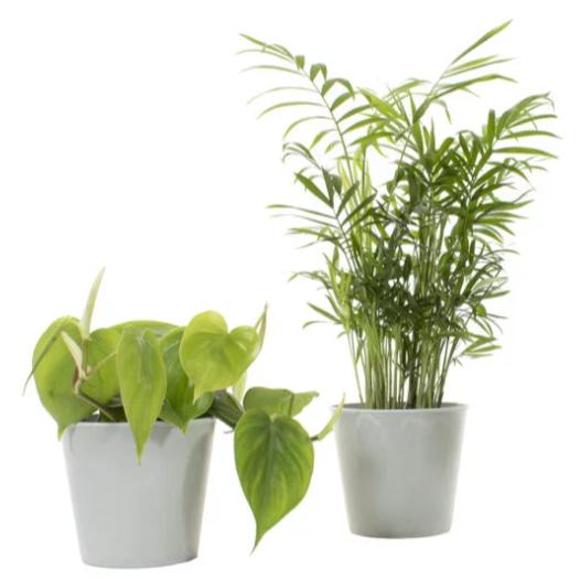 groene-planten-in-pot-thuiswerken-cadeau-medewerkers-pakketzenden