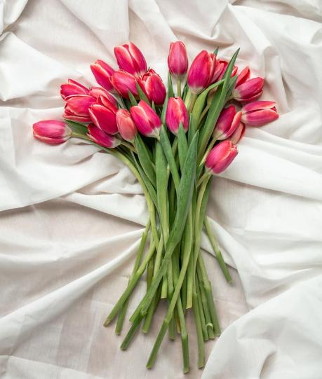 Tulpenpost-XL-tulpen-30-stuks-1-kleur-versturen-pakketzenden