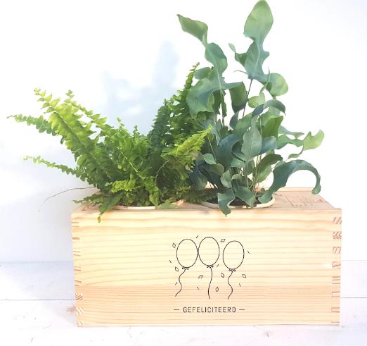 plantenbox-medium-relatiegeschenk-gefeliciteerd-balonnen-origineel-cadeau-medewerkers-verrassen