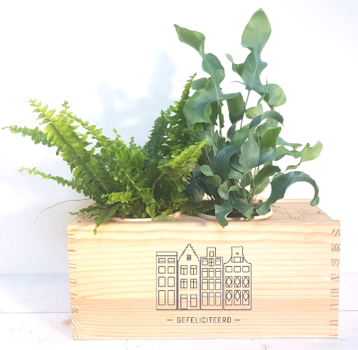 plantenbox-medium-relatiegeschenk-gefeliciteerd-origineel-cadeau-medewerkers-verrassen