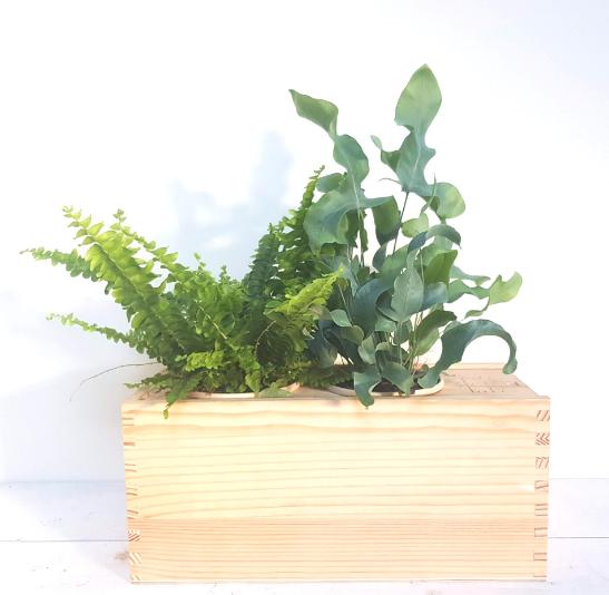 plantenbox-medium-relatiegeschenk-origineel-cadeau-medewerkers-verrassen