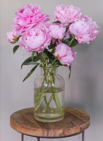pioenrozen-pakketzenden.nl-roze-brievenbuscadeau