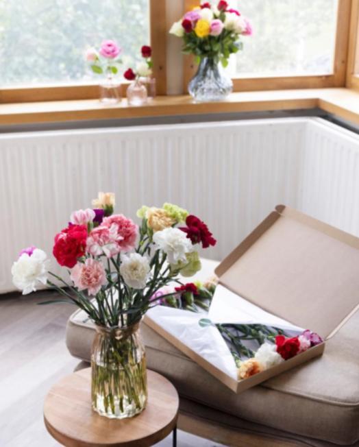 anjers-per-post-pakketzenden.nl-brievenbuscadeau-brievenbuspost-brievenbusgeschenk-thuiswerken-brievenbus-groei-en-bloei-bloemen-anjers